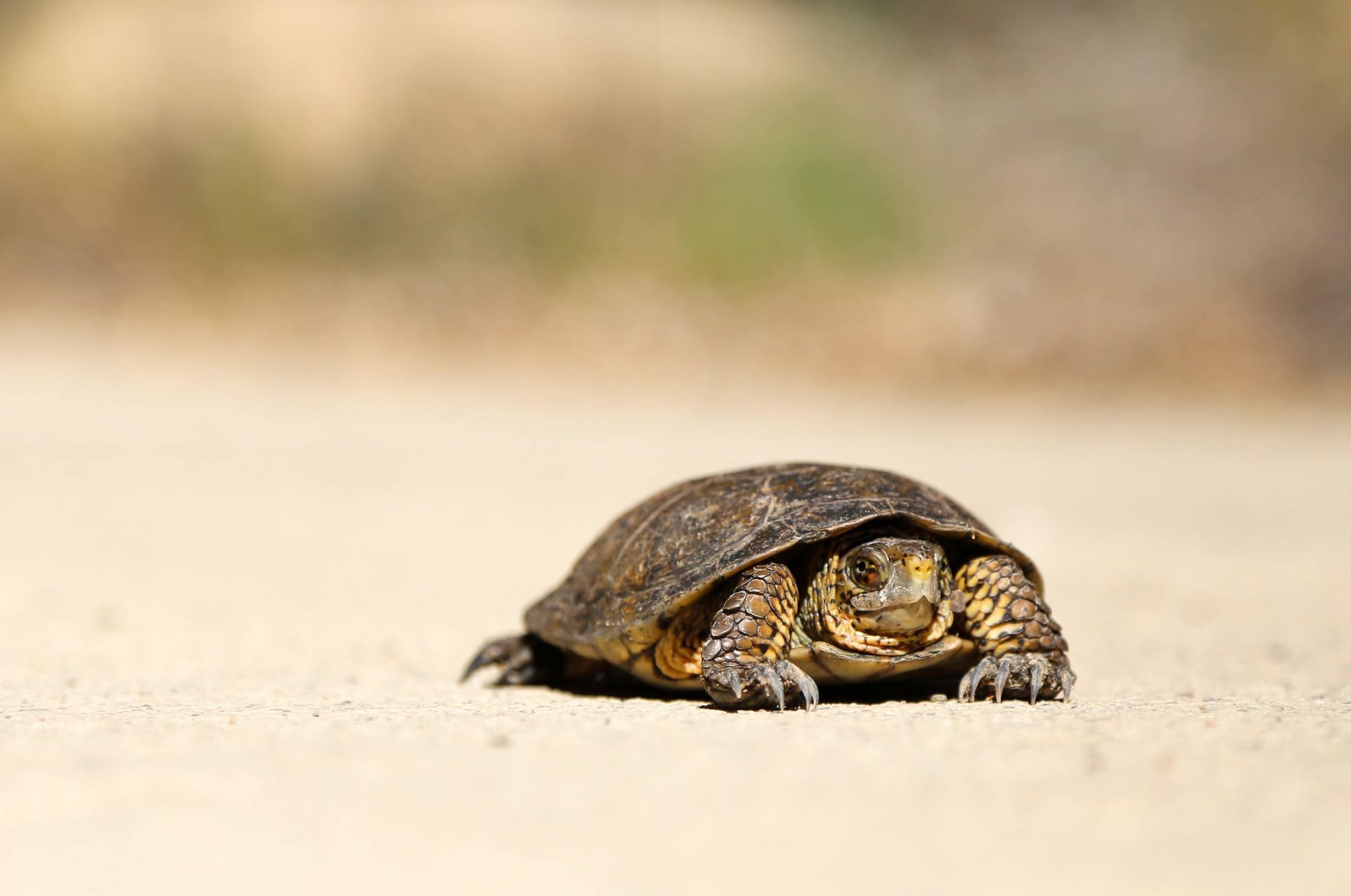 Schildkröte langsam Beschleunigung